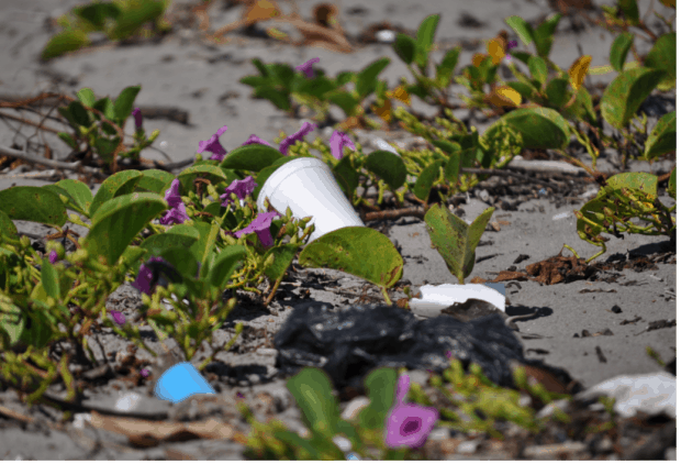 Beach Clean Up In El Cuco, El Salvador